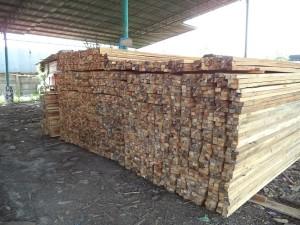 Harga Kayu Racuk Sumatra